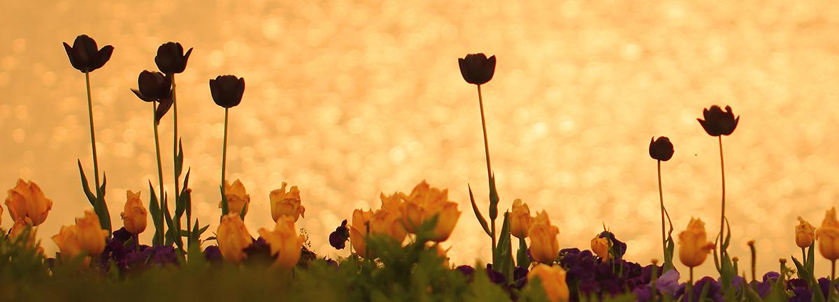 黃鴨 風車 100萬株花 n個愛上江蘇的航拍在這兒