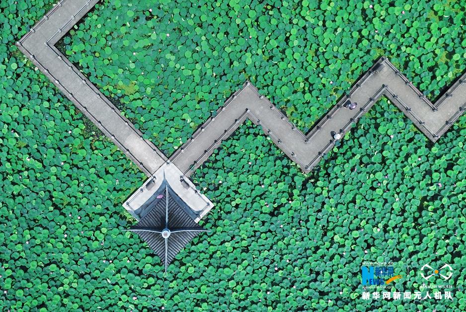 航拍武漢東湖荷園荷花綻放 廊橋相連盡顯幾何美
