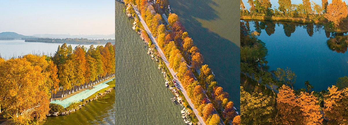繽紛東湖綠道——初冬的暖色調