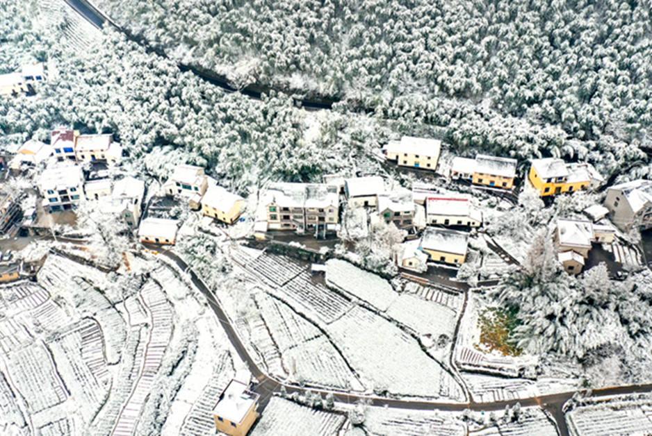 下雪啦!浙江山林秒變雪原