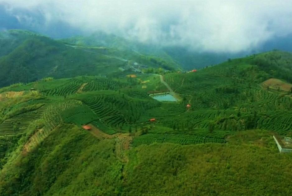 杭州富陽安頂山:茶園染新綠 暖陽迎客來