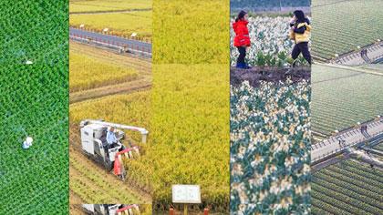 福建漳州:藏著花香夢的稻田詩