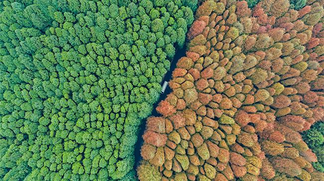 大美!這裏是山王坪 自然之秘境