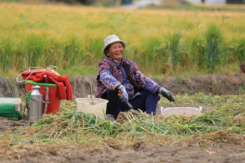 黎明鄉:人勤農事忙 致富有奔頭