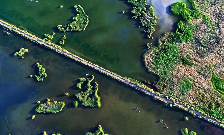 """航拍西北戈壁濕地 宛如巨幅""""綠拼圖"""""""