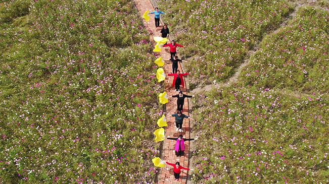 無人機航拍重慶黔江:格桑花開山村美