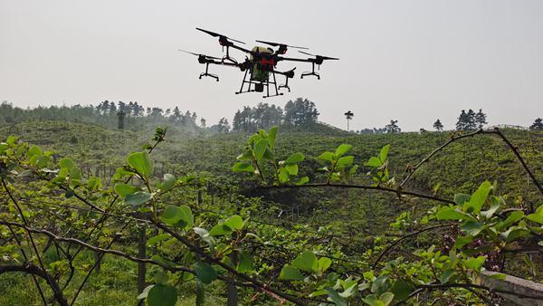 修文:無人機飛防作業 統防統治病蟲害