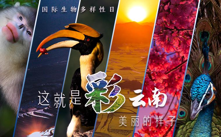 """【""""飛閱""""中國】這就是""""彩""""雲南美麗的樣子!"""