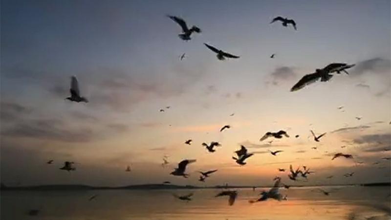 """【""""飛閱""""中國】和群鳥來場約會 198種鳥類喜愛的""""打卡地"""""""