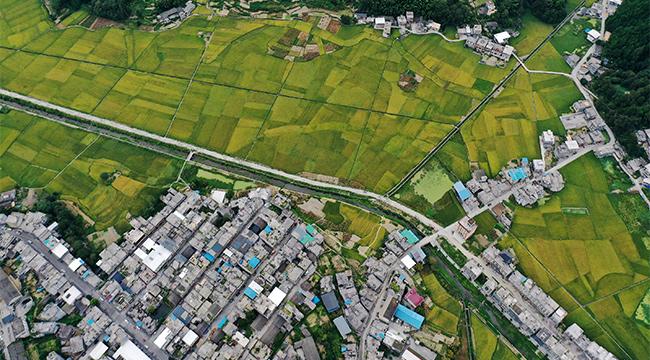 """【""""飛閱""""中國】重慶高海拔山谷裏的稻田也很美"""
