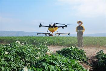 甘肅定西:無人機噴藥防蟲害