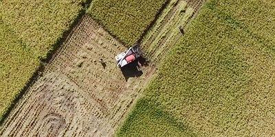 大地樂章|航拍重慶萬畝水稻成熟 宛如大地鋪金