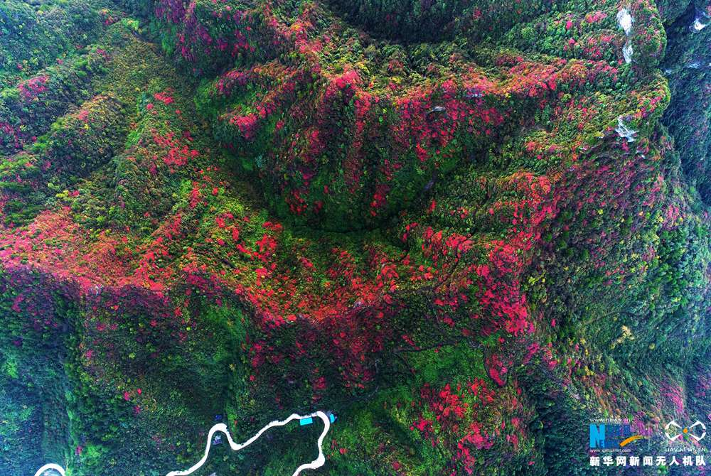 航拍重慶酉陽秋日紅葉 如同從天上灑落的花瓣