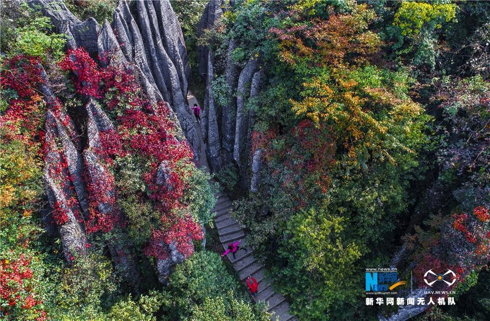 航拍:國家喀斯特生態公園 生態石林醉遊人