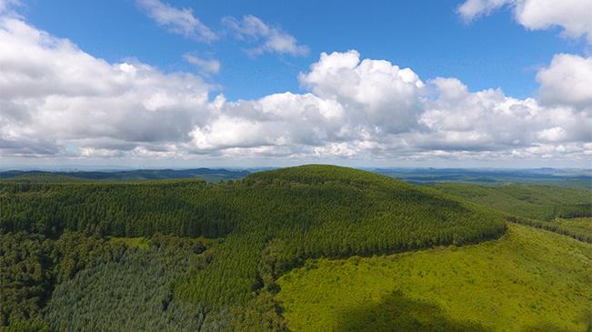 航拍塞罕壩林場 守護綠色地球詮釋美麗中國