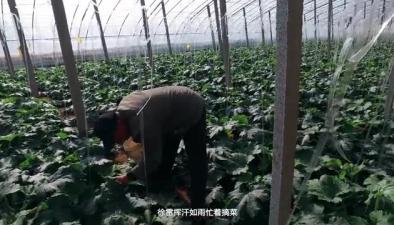 紀錄片:菜農徐雷的鄉村幸福路