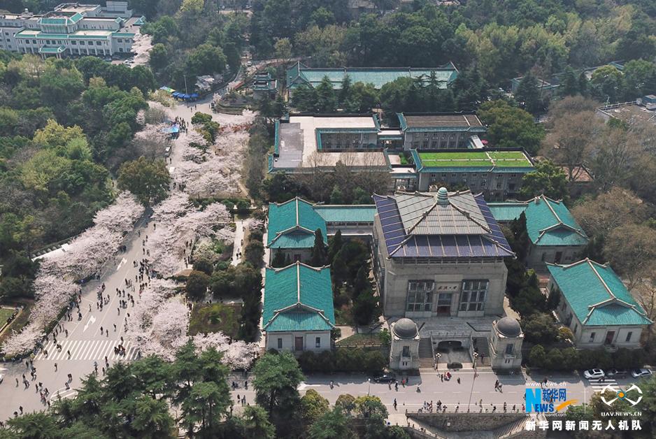 航拍武漢大學櫻花綻放 周末預約限額3萬人