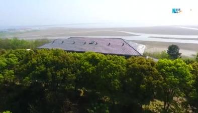 航拍湖北網湖濕地:候鳥的家