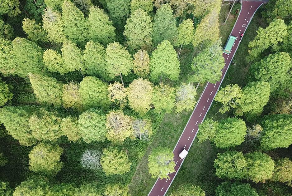 航拍黃海森林公園 萬木爭榮芳草淒淒